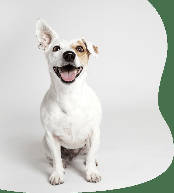 Beds4Dogs - legowiska dla psów, łóżeczka posłania i poduszki dla psa