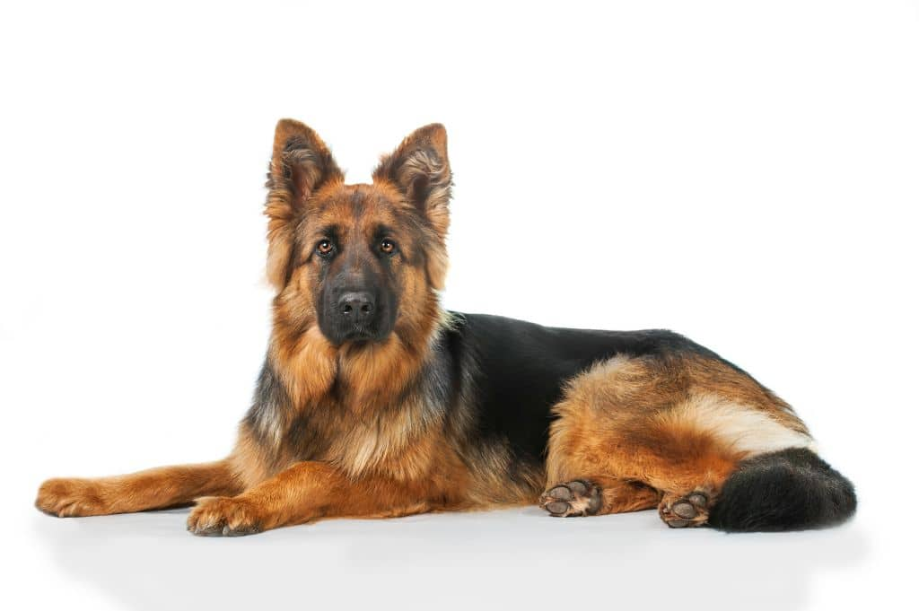Legowisko dla dużych psów - owczarek niemiecki